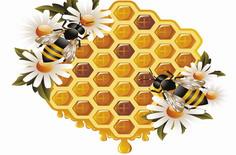 五招识别真假蜂蜜